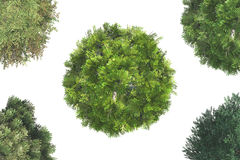 Top View of Trees Stock Images
