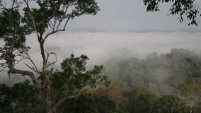 Top view of a tropical forest in a fog. Andreev. Top view of a tropical forest in a fog. A tree in the background of the landscape of Laos in the fog. The fog stock video footage
