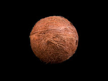 Top view of a tropical and whole coconut on a black background. Close-up of fresh nut. Healthful coco full of vitamins. Royalty Free Stock Image
