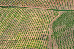 Top view of Tuscan vineyards Royalty Free Stock Photo