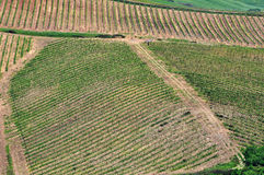 Top view of Tuscan vineyards Royalty Free Stock Photography