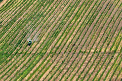 Top view of Tuscan vineyards Royalty Free Stock Photos