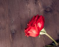 Top of view of two red roses on old wood, old style, valentine day and love concept Stock Photos