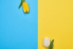 Top view of two tulips with copy space over flatlay Royalty Free Stock Photography