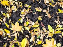 top view of various fallen leaves on plowed land stock photo