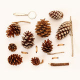Top view of vintage objects and pine cones Stock Photo