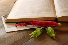 Top view of vintage open book and dry red flower. vintage filtered image Stock Photo