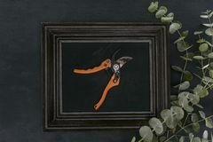 Top view of vintage wooden frame with garden shears and eucalyptus Stock Image