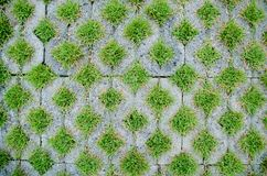 Top view Walkway cement, grass pattern For Home. House Stock Photo