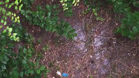 Top view of a wet soil with plants in a heavy rainstorm with thunder and rain sounds. On a early morning summer day stock video footage