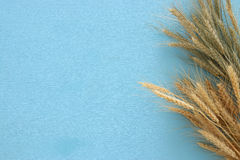 top view of wheat crop. Symbols of jewish holiday - Shavuot Stock Photo