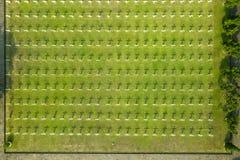 White crosses at Dutch war graveyard stock photos