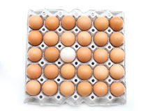 Top view for white egg among brown egg in box Stock Images