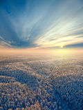 Top view of winter forest Royalty Free Stock Photo