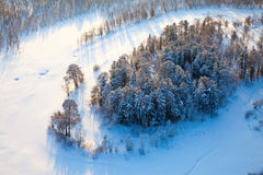 Top view of winter forest Royalty Free Stock Image