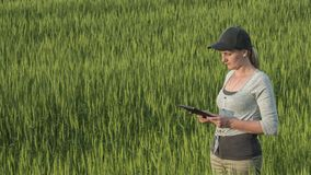 Top view of Woman farmer with tablet in hand stands on green wheat field stock photo