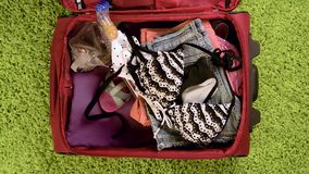 Suitcase with summer clothing. Top view - woman hands are packing suitcase for a journey. Girl dreams about travell. Summer clothing and diving mask with snorkel stock footage