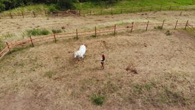 Top view of a woman trains a horse in a paddock.