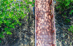 Top view wood bridge in the mangrove forest Royalty Free Stock Photos