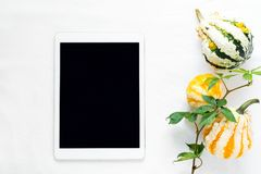 Top view on work table. Tablet, wild grape branch and pumpkins. Flat lay royalty free stock photo