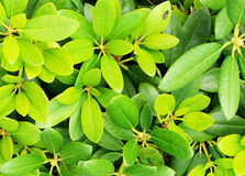 Top view of yellow and green leaves Stock Photography