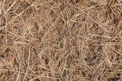 Top view of yellow hay on ground.nature texture background. Stock Image
