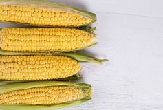 Top view of young corn heads on white wood background. Space for text royalty free stock photo