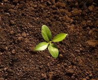 Top view of young plant Royalty Free Stock Photo