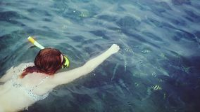 Top of view of young woman in bikini snorkeling in mask feeding fish with piece of bread in the sea. slow motion stock video