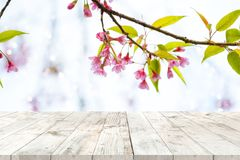 Pink cherry blossom flower sakura on sky background in spring season. Top of wood table empty ready for your product and food display or montage with pink royalty free stock image