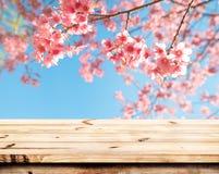 pink cherry blossom flower sakura on sky background in spring season. Royalty Free Stock Photo