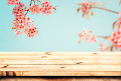Top of wood table with pink cherry blossom flower sakura on sky background in spring season. Top of wood table empty ready for your product and food display or Royalty Free Stock Photography