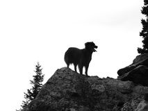On Top of the World. A black and white shot of a Labrador Retriever atop a mountain at dusk, waiting for her owner to finish the long climb- Boulder, Colorado stock photo