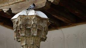 Top y techo del haz de madera almacen de video