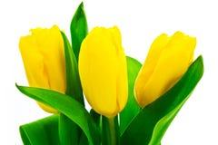 topazowy tulipan Zdjęcia Royalty Free