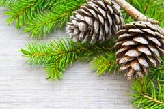 Topetones del bosque de la Navidad Foto de archivo libre de regalías