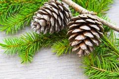 Topetones del bosque de la Navidad Foto de archivo