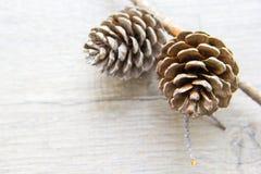 Topetones del bosque de la Navidad Imagen de archivo