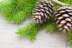 Topetones del bosque de la Navidad Imágenes de archivo libres de regalías