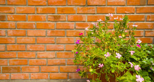 Topf der Blume Stockfoto