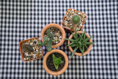 Topf fünf des Kaktus Stockfotografie