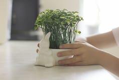 Topf in Form eines Osterhasen mit Gras in Kind-` s Händen Lizenzfreies Stockfoto