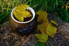 Topf im Herbst Stockbild