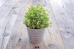 Topf Zierpflanzen gesetzt auf hölzernes Stockfotografie