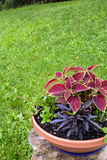 Topfpflanze auf Baumstumpf lizenzfreie stockbilder