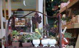 Topfpflanze im Regal Stockbilder