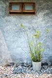 Topfpflanzen außerhalb des Fensters Lizenzfreie Stockfotografie