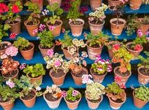Topfpflanzen auf Anzeige Lizenzfreie Stockfotografie