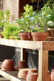 Topfpflanzen, die auf hölzernem Warenkorb im Gewächshaus sitzen Lizenzfreies Stockfoto