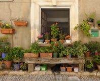 Topfpflanzen durch Haus in Provence Stockfoto